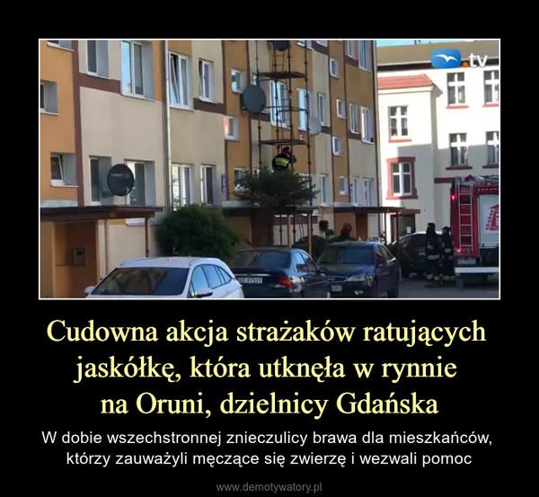 Cudowna akcja strażaków ratujących jaskółkę, która utknęła w rynnie na Oruni, dzielnicy Gdańska – W dobie wszechstronnej znieczulicy brawa dla mieszkańców, którzy zauważyli męczące się zwierzę i wezwali pomoc