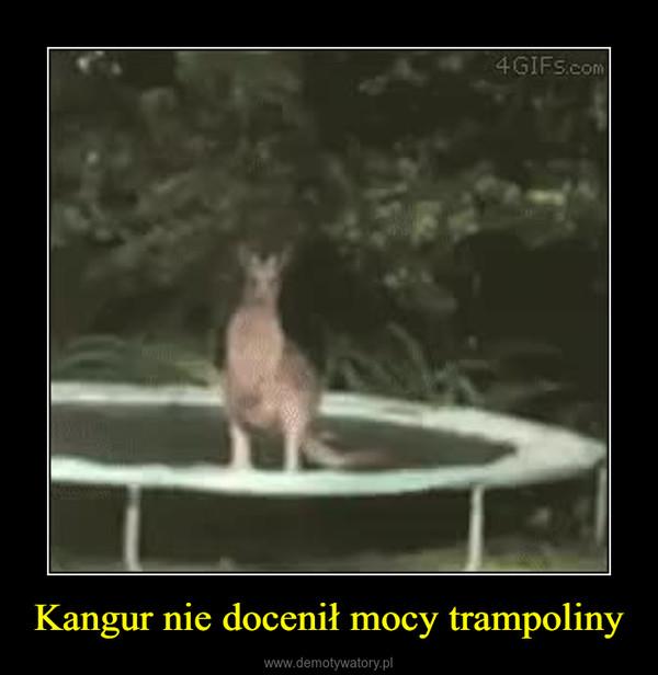 Kangur nie docenił mocy trampoliny –
