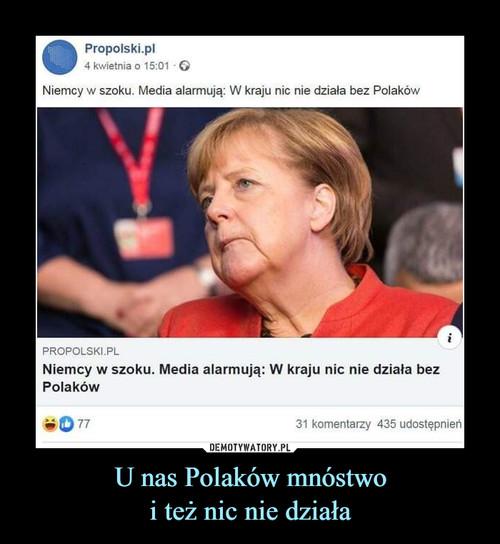 U nas Polaków mnóstwo i też nic nie działa