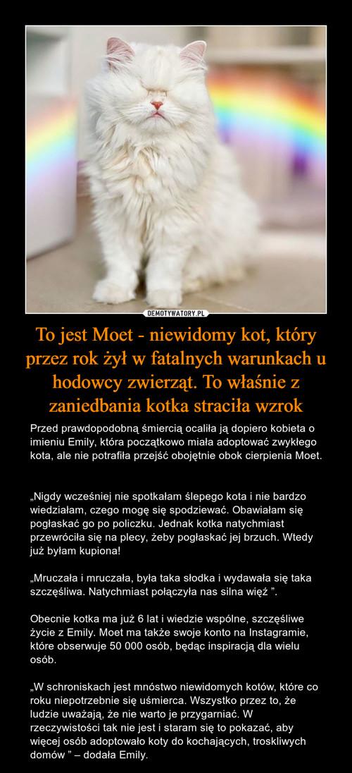 To jest Moet - niewidomy kot, który przez rok żył w fatalnych warunkach u hodowcy zwierząt. To właśnie z zaniedbania kotka straciła wzrok