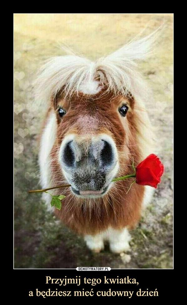 Przyjmij tego kwiatka, a będziesz mieć cudowny dzień –
