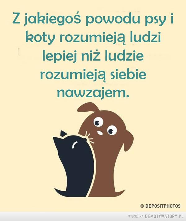 Psy i koty –  Z jakiegoś powodu psy ikoty rozumieją ludzilepiej niż ludzierozumieją siebienawzajem.© DEPOSITPHOTOS