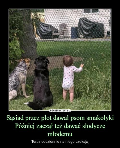 Sąsiad przez płot dawał psom smakołyki Później zaczął też dawać słodycze młodemu