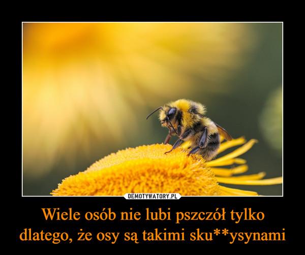 Wiele osób nie lubi pszczół tylko dlatego, że osy są takimi sku**ysynami –