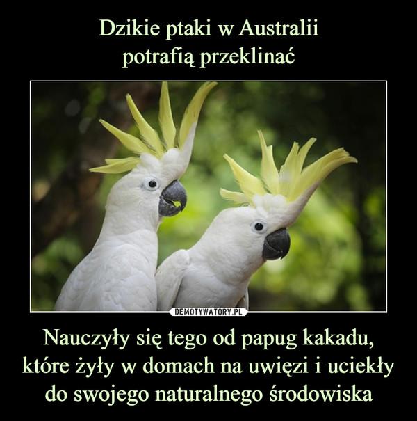Nauczyły się tego od papug kakadu, które żyły w domach na uwięzi i uciekły do swojego naturalnego środowiska –