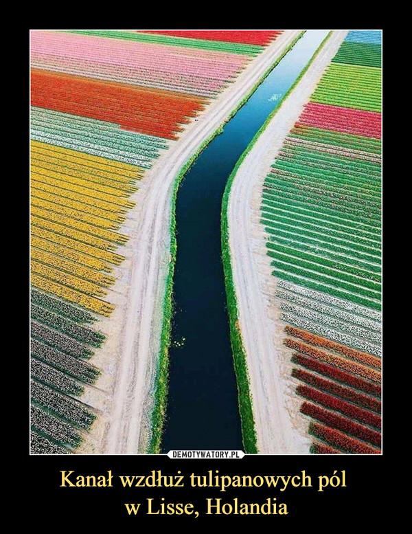 Kanał wzdłuż tulipanowych pól w Lisse, Holandia –