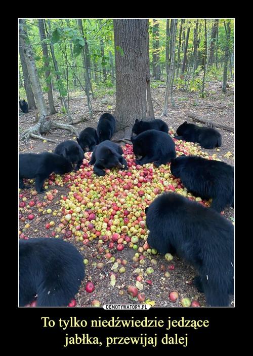 To tylko niedźwiedzie jedzące  jabłka, przewijaj dalej
