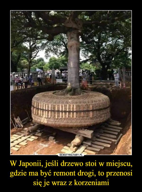 W Japonii, jeśli drzewo stoi w miejscu, gdzie ma być remont drogi, to przenosi się je wraz z korzeniami –