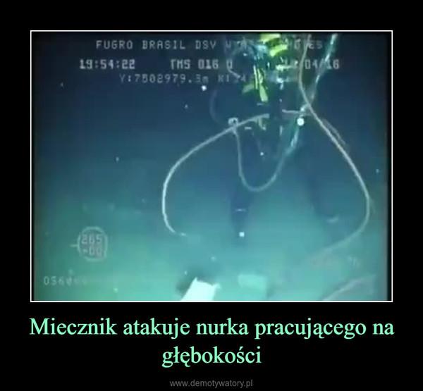 Miecznik atakuje nurka pracującego na głębokości –