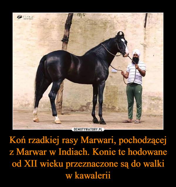 Koń rzadkiej rasy Marwari, pochodzącej z Marwar w Indiach. Konie te hodowane od XII wieku przeznaczone są do walki w kawalerii –