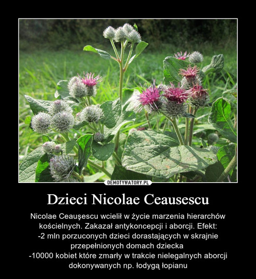 Dzieci Nicolae Ceausescu