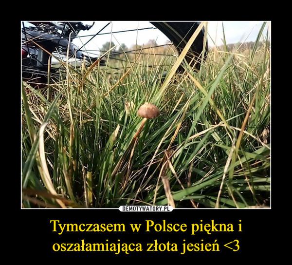 Tymczasem w Polsce piękna i oszałamiająca złota jesień <3 –