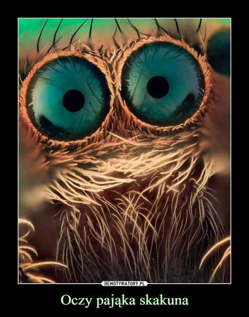 Oczy pająka skakuna