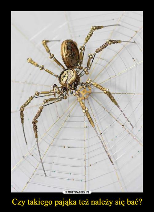 Czy takiego pająka też należy się bać?