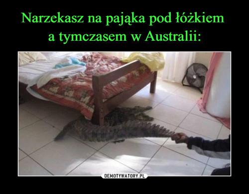 Narzekasz na pająka pod łóżkiem  a tymczasem w Australii: