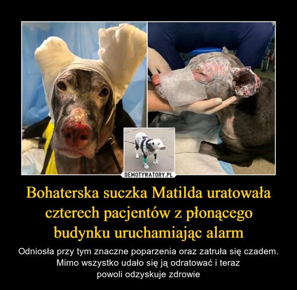 Bohaterska suczka Matilda uratowała czterech pacjentów z płonącegobudynku uruchamiając alarm – Odniosła przy tym znaczne poparzenia oraz zatruła się czadem. Mimo wszystko udało się ją odratować i terazpowoli odzyskuje zdrowie
