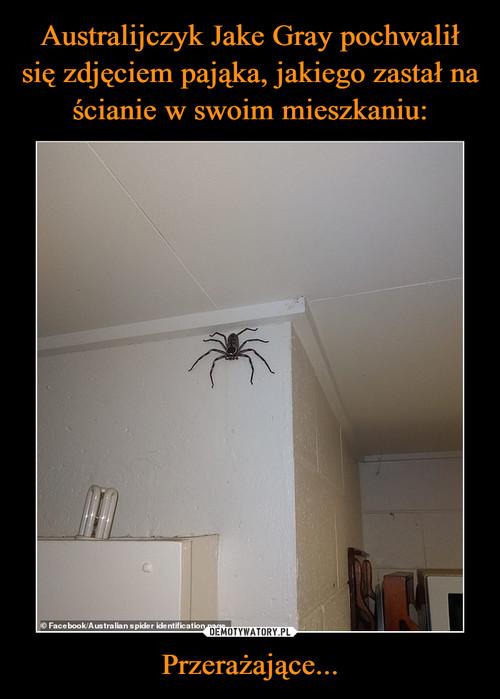 Australijczyk Jake Gray pochwalił się zdjęciem pająka, jakiego zastał na ścianie w swoim mieszkaniu: Przerażające...