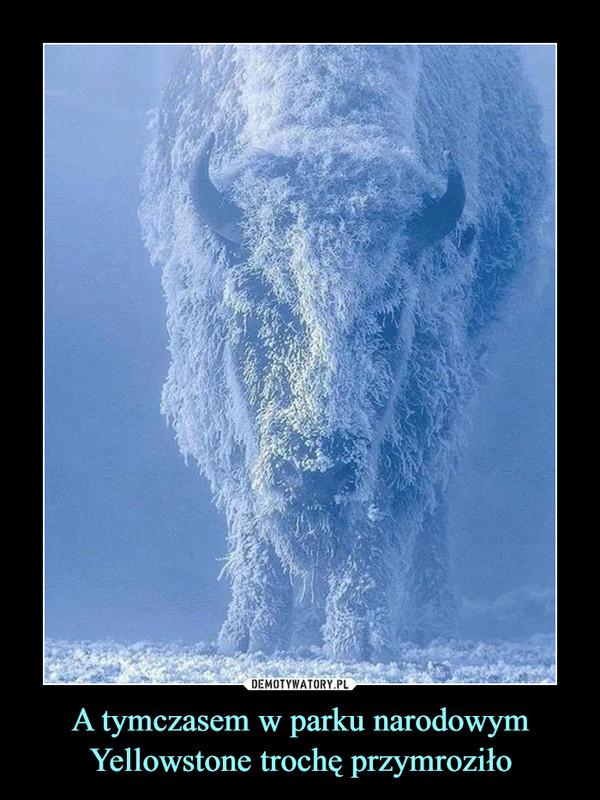 A tymczasem w parku narodowym Yellowstone trochę przymroziło –