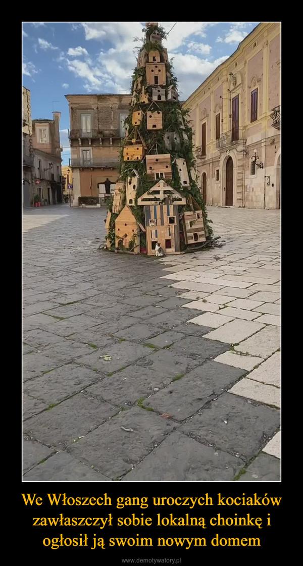 We Włoszech gang uroczych kociaków zawłaszczył sobie lokalną choinkę i ogłosił ją swoim nowym domem –