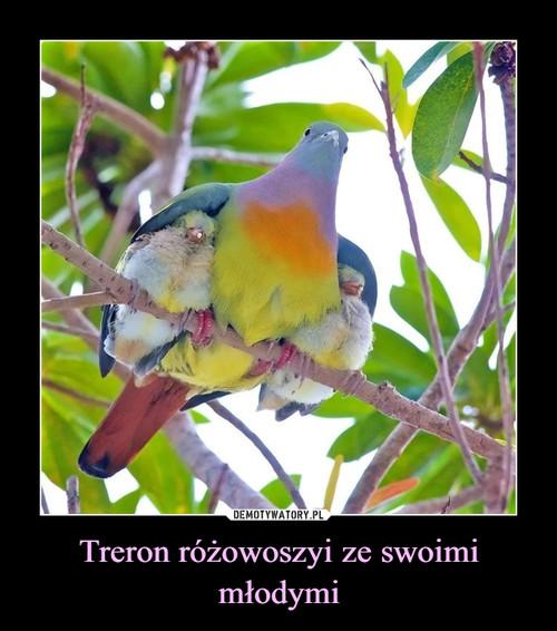 Treron różowoszyi ze swoimi młodymi