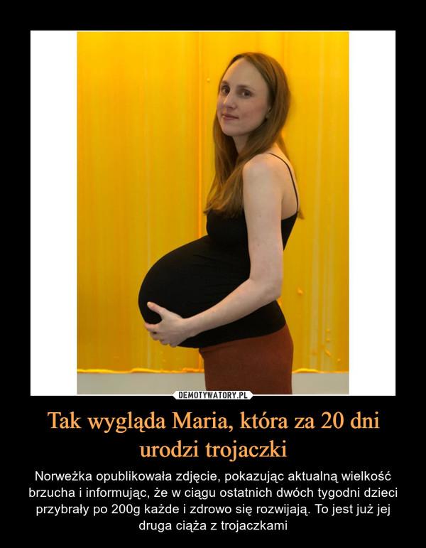 Tak wygląda Maria, która za 20 dni urodzi trojaczki – Norweżka opublikowała zdjęcie, pokazując aktualną wielkość brzucha i informując, że w ciągu ostatnich dwóch tygodni dzieci przybrały po 200g każde i zdrowo się rozwijają. To jest już jej druga ciąża z trojaczkami