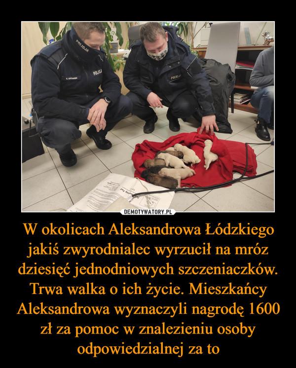 W okolicach Aleksandrowa Łódzkiego jakiś zwyrodnialec wyrzucił na mróz dziesięć jednodniowych szczeniaczków. Trwa walka o ich życie. Mieszkańcy Aleksandrowa wyznaczyli nagrodę 1600 zł za pomoc w znalezieniu osoby odpowiedzialnej za to –