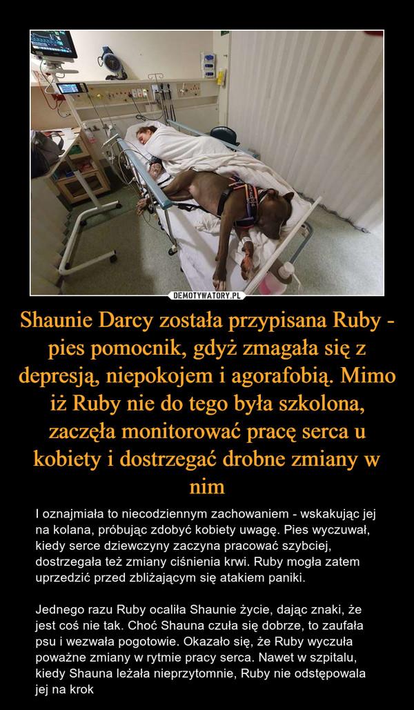 Shaunie Darcy została przypisana Ruby - pies pomocnik, gdyż zmagała się z depresją, niepokojem i agorafobią. Mimo iż Ruby nie do tego była szkolona, zaczęła monitorować pracę serca u kobiety i dostrzegać drobne zmiany w nim – I oznajmiała to niecodziennym zachowaniem - wskakując jej na kolana, próbując zdobyć kobiety uwagę. Pies wyczuwał, kiedy serce dziewczyny zaczyna pracować szybciej, dostrzegała też zmiany ciśnienia krwi. Ruby mogła zatem uprzedzić przed zbliżającym się atakiem paniki. Jednego razu Ruby ocaliła Shaunie życie, dając znaki, że jest coś nie tak. Choć Shauna czuła się dobrze, to zaufała psu i wezwała pogotowie. Okazało się, że Ruby wyczuła poważne zmiany w rytmie pracy serca. Nawet w szpitalu, kiedy Shauna leżała nieprzytomnie, Ruby nie odstępowala jej na krok