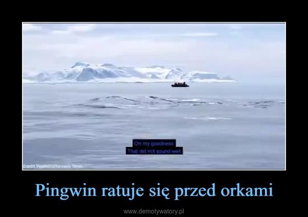 Pingwin ratuje się przed orkami –