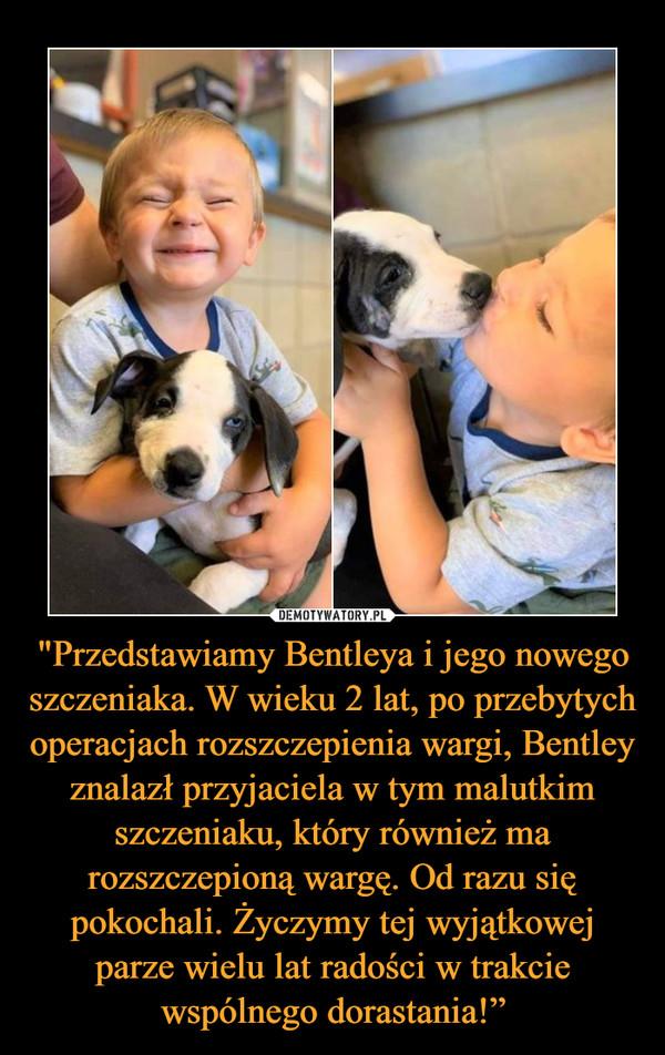 """""""Przedstawiamy Bentleya i jego nowego szczeniaka. W wieku 2 lat, po przebytych operacjach rozszczepienia wargi, Bentley znalazł przyjaciela w tym malutkim szczeniaku, który również ma rozszczepioną wargę. Od razu się pokochali. Życzymy tej wyjątkowej parze wielu lat radości w trakcie wspólnego dorastania!"""" –"""
