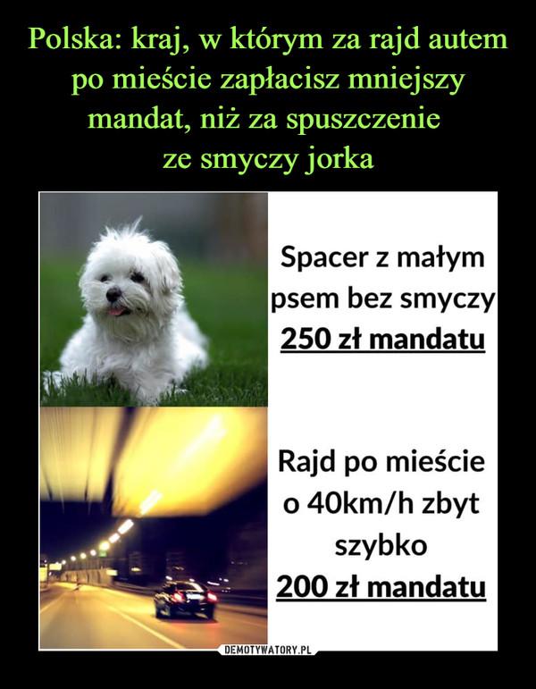 –  Spacer z małympsem bez smyczy250 zł mandatuRajd po mieścieo 40km/h zbytszybko200 zł mandatu