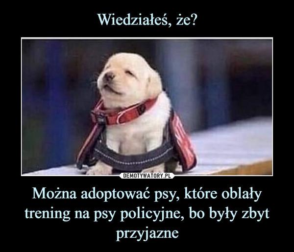 Można adoptować psy, które oblały trening na psy policyjne, bo były zbyt przyjazne –