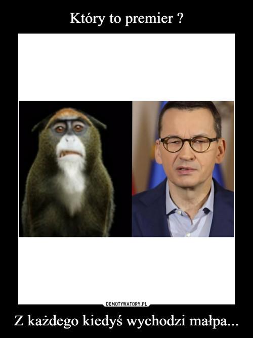 Który to premier ? Z każdego kiedyś wychodzi małpa...