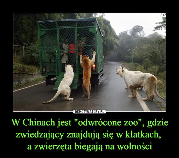 """W Chinach jest """"odwrócone zoo"""", gdzie zwiedzający znajdują się w klatkach, a zwierzęta biegają na wolności –"""