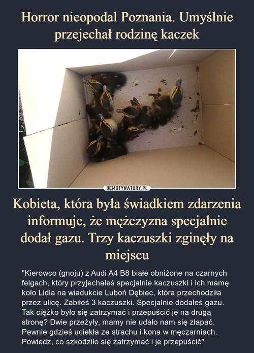 Horror nieopodal Poznania. Umyślnie przejechał rodzinę kaczek Kobieta, która była świadkiem zdarzenia informuje, że mężczyzna specjalnie dodał gazu. Trzy kaczuszki zginęły na miejscu